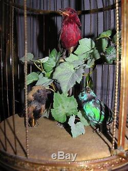 Automate cage à oiseaux siffleur en métal doré de la maison Bontems 3 oiseaux